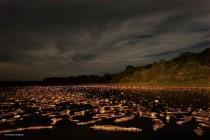 setki kajmanów brazylia